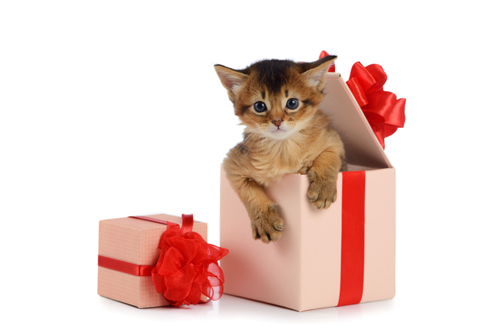 pet as a gift